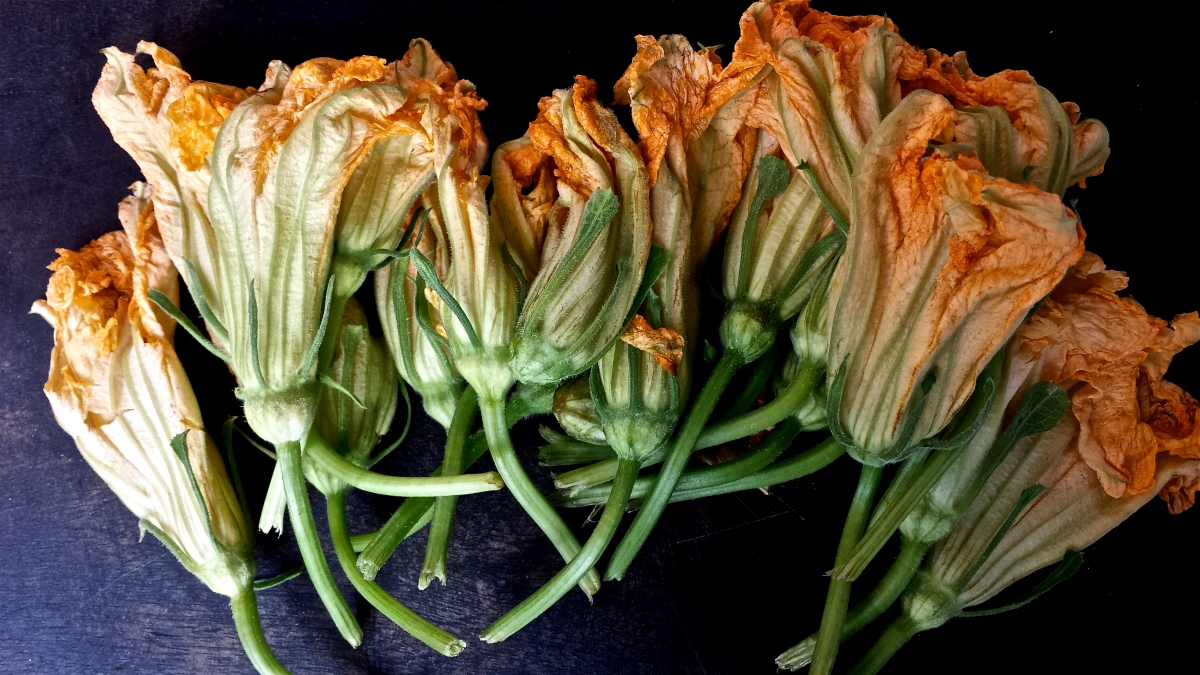 Baked Goat Cheese Zucchini Blossoms